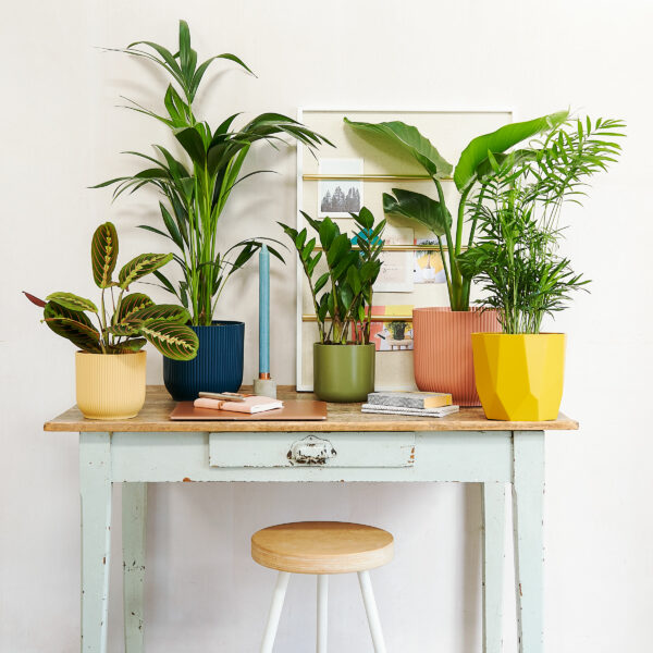 Martha Brook P.S. On The Blog The unexpected benefits of plants in the workspace flowers working from home indoor plants office