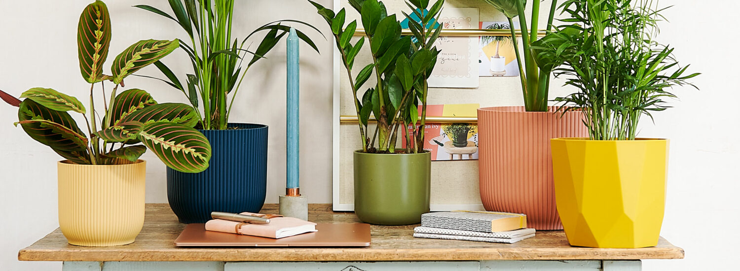 The unexpected benefits of plants in the workspace