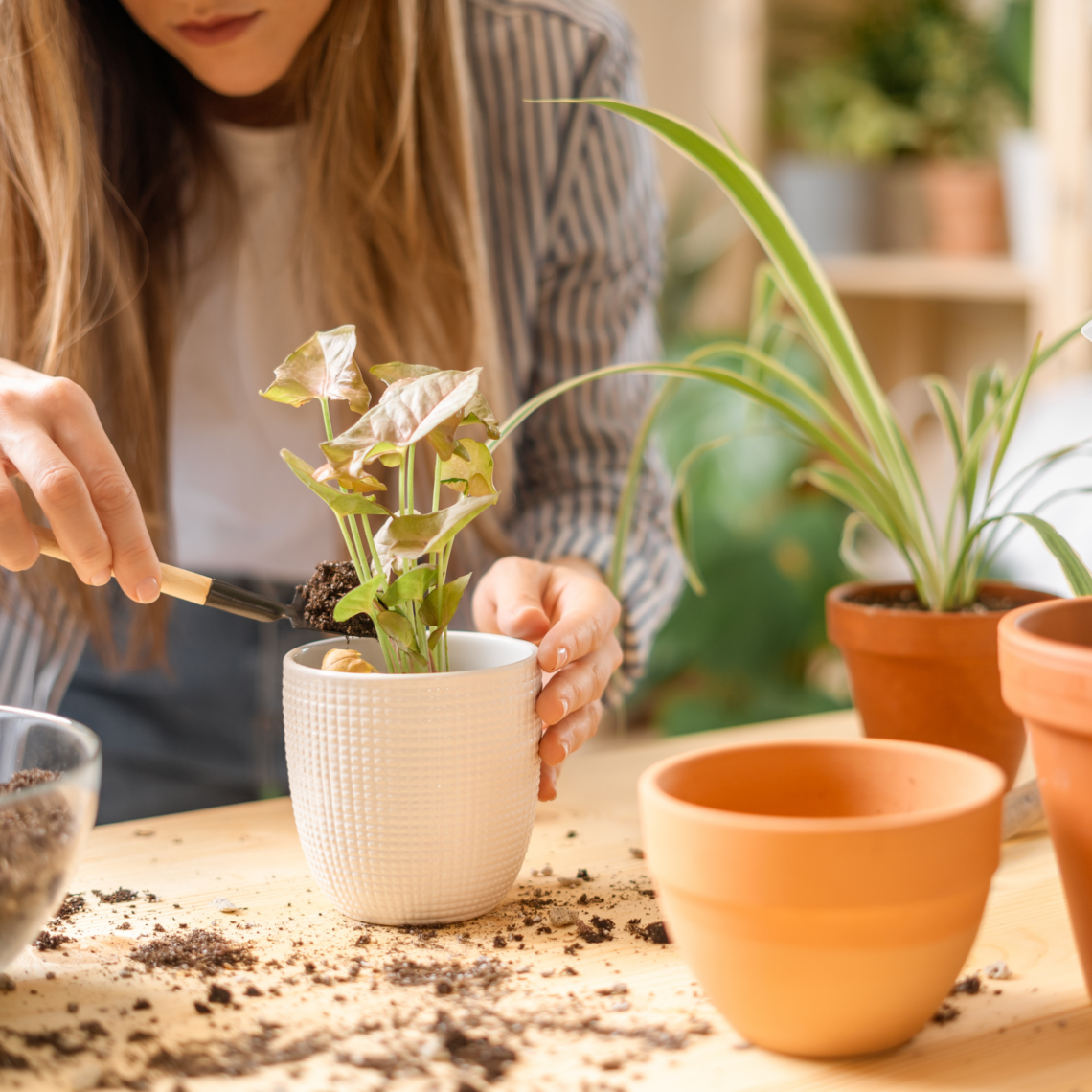 Martha Brook P.S. On The Blog 6 fantastic ways to connect with nature for mental health awareness week gardening plants flowers