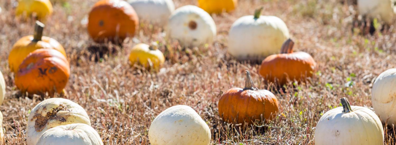10-of-the-best-activities-in-autumn-header