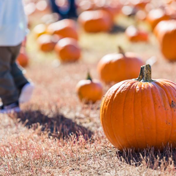 10-of-the-best-activities-in-autumn